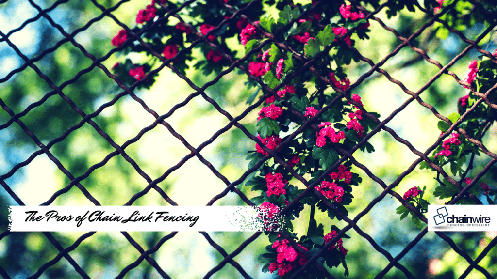chain link fencing benefits