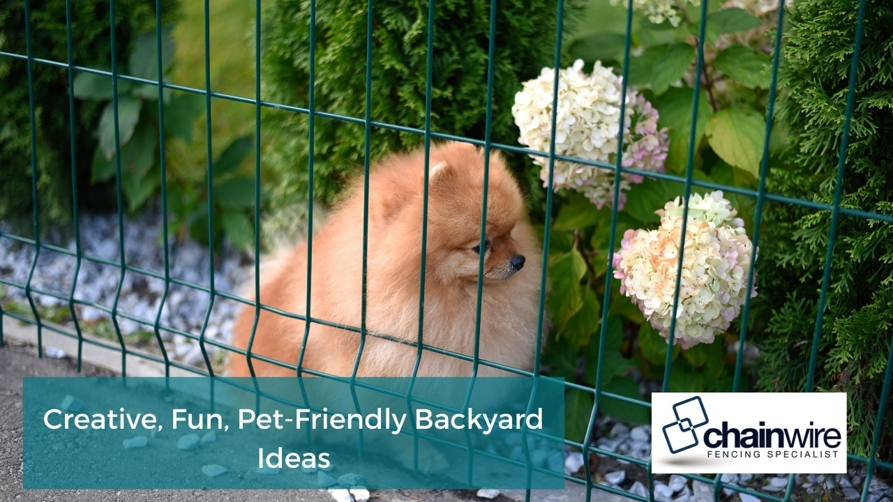 Creative, Fun, Pet-Friendly Backyard Ideas